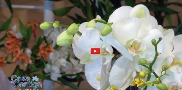 Plantas de Interior, cuidados y consejos para Anturio, Spatifilium y Orquideas