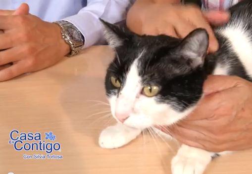 Que Gatos son Ideales Como Mascotas para Casa