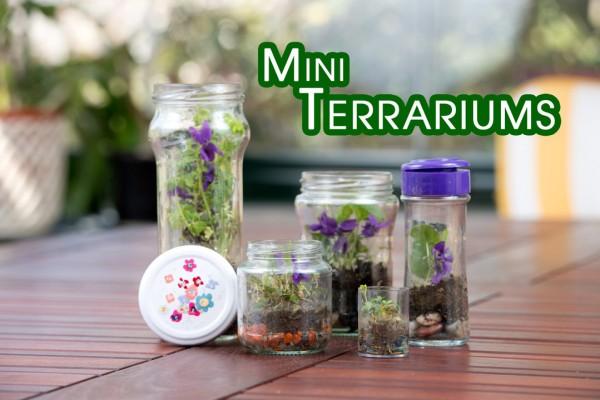 Mini-Terrariums-o-Terrario