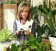 Las Plantas Antipolucion, un hallazgo para la salud.