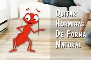 En casa contigo - Como eliminar las hormigas de la cocina ...